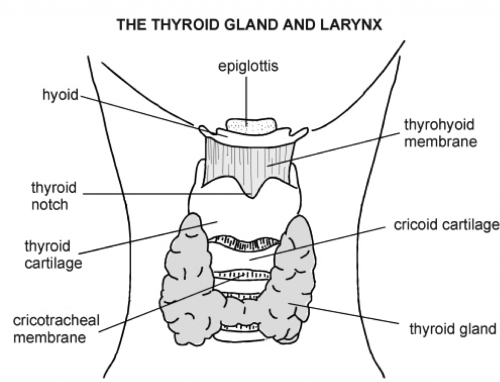 Neck Glands Diagram Diagram Base Website Glands Diagram
